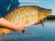 TŘEBOŇSKÝ KAPR - rybářské závody