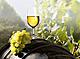 Jiihomoravská regionální výstava vín v Brně