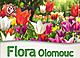 Flora Olmütz - Frühling